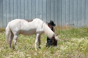 Pony-6313.jpg