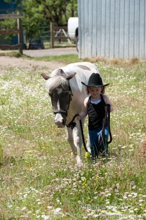 Pony-6319.jpg