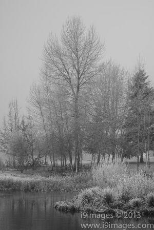 Ice-4111.jpg